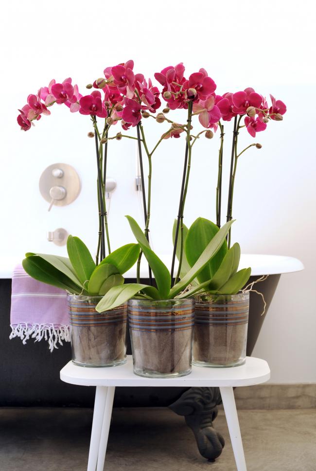Arrangement incroyablement délicat d'orchidées roses dans des pots en verre