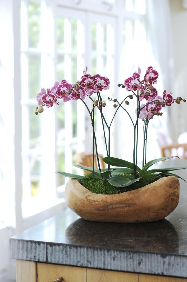 Vous pouvez également planter plusieurs plantes dans un pot en bois spacieux de cette forme inhabituelle.