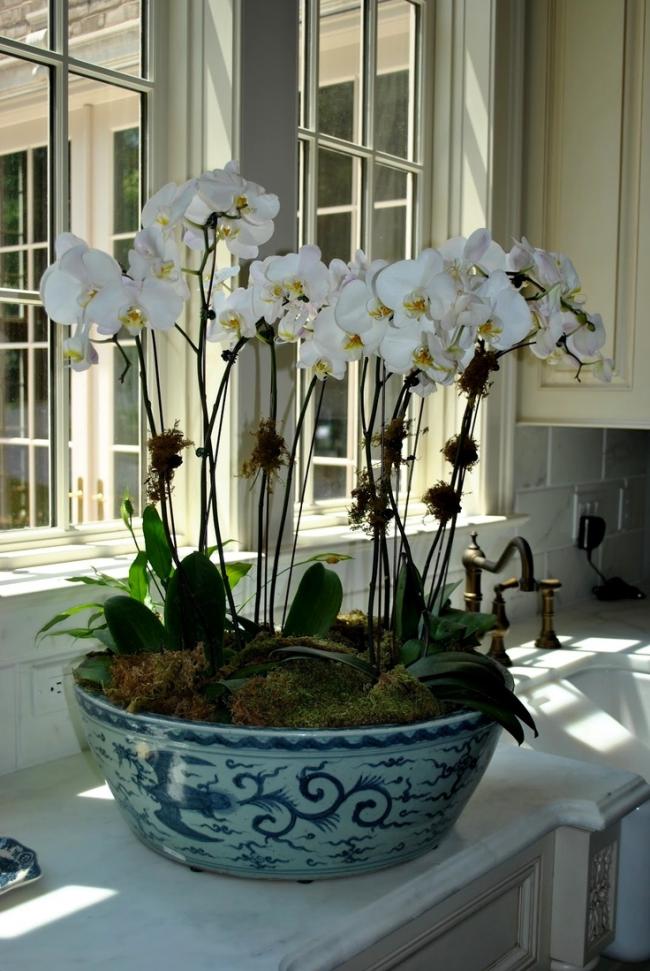 Vous pouvez planter plusieurs orchidées dans un grand pot en céramique.  Vous pouvez choisir des fleurs unies et multicolores, obtenant des compositions originales pour compléter l'intérieur de la maison