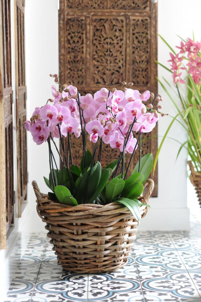 Un panier en osier avec des orchidées est très harmonieux à l'intérieur.