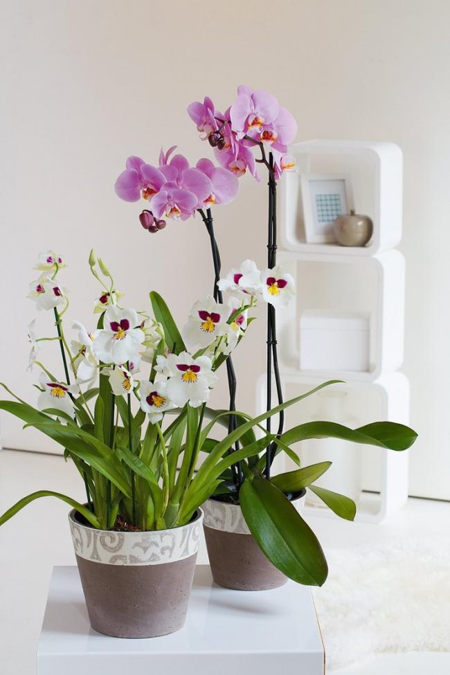 Pots en céramique délicats de couleur neutre pour les orchidées, adaptés aux fleurs de toutes les nuances