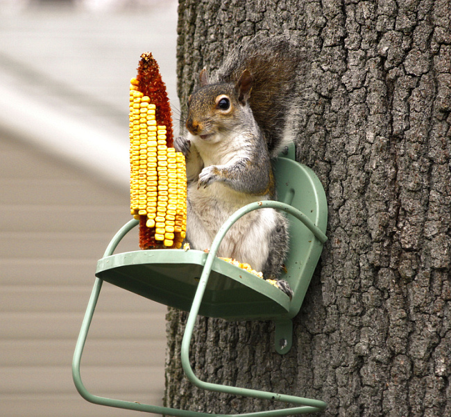 Décorations de jardin bricolage.  Si vous habitez près d'une plantation forestière ou d'un parc, fabriquez une mangeoire à écureuil simple et amusante.  Pour ce faire, vous devez fixer de manière rigide sur un arbre, par exemple une chaise d'un ensemble de meubles jouets, à l'aide d'une paire de vis autotaraudeuses.  A l'aide d'une longue vis autotaraudeuse, une tête de maïs est vissée dessus, et elle est tout aussi facile à remplacer