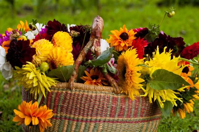 Voulez-vous fleurir votre jardin avec de belles fleurs lumineuses pour l'automne?  Vous trouverez ci-dessous une sélection d'idées pour vous inspirer.