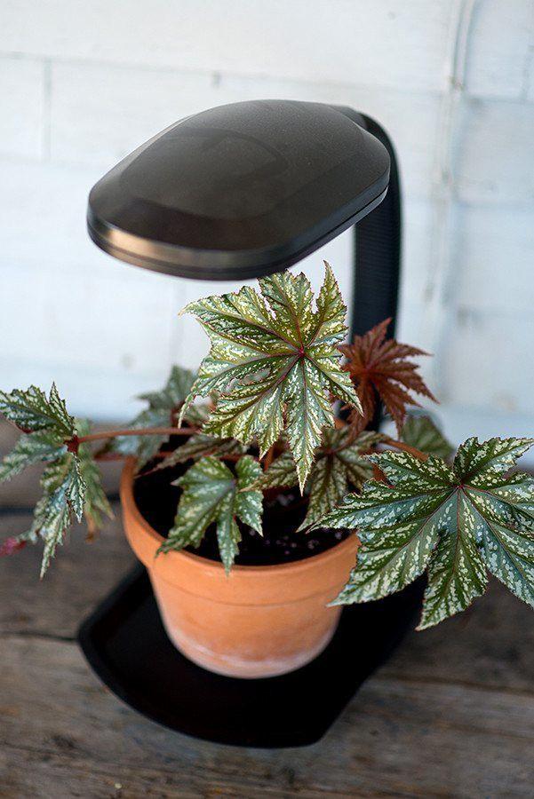 Certaines parties du spectre visible sont essentielles à la croissance saine des plantes