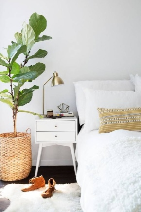 Les plantes d'intérieur peuvent-elles être conservées dans la chambre ?