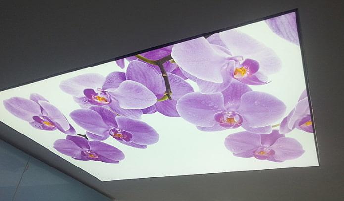plafond d'orchidée