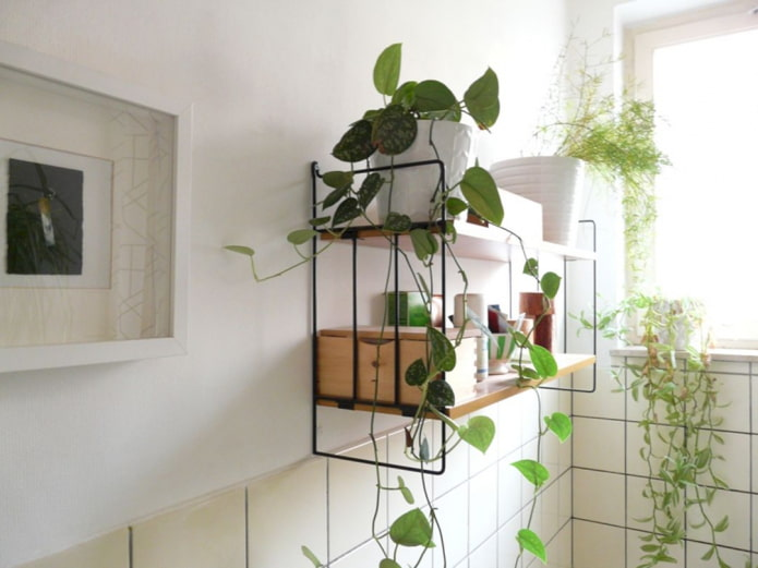 plantes sur l'étagère de la salle de bain