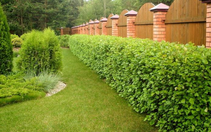 buissons le long de la clôture