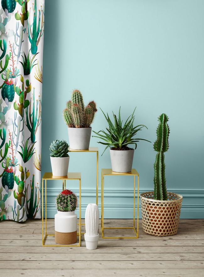 Si vous savez comment prendre soin d'un cactus, vous pouvez obtenir une croissance réussie et même une floraison annuelle.