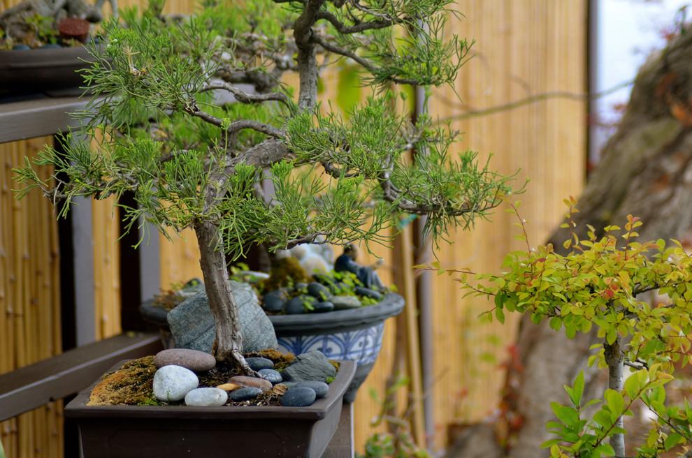 Le bonsaï sera un excellent élément de votre décoration intérieure
