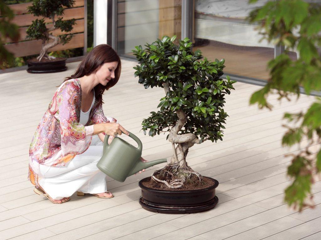 Arroser le bonsaï