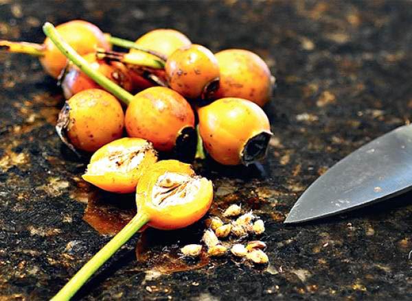 Les graines sont mieux récoltées à partir de fruits légèrement rouges.